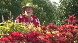 Sun Coleus - Southern Gardening Television