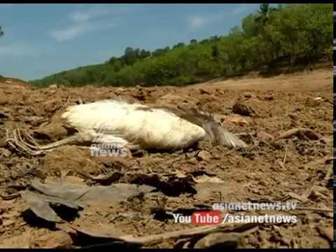 Neyyar is in drought; വേനലില് വരണ്ടുണങ്ങി നെയ്യാര്