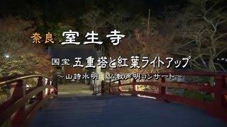 室生寺 国宝五重塔の紅葉ライトアップと仏教声明コンサート
