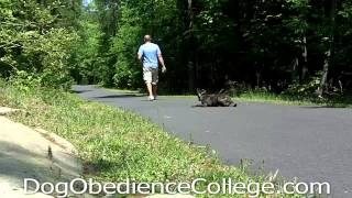 Dog Obedience College Of Memphis With Sam | Dog Training