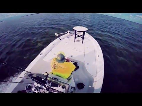 Amazing fishing action in Tampa Bay, Florida
