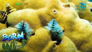 Born to be Wild: Christmas Under the Sea!