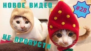 Приколы про животных Смешное видео про котов собак и не только Выпуск 28
