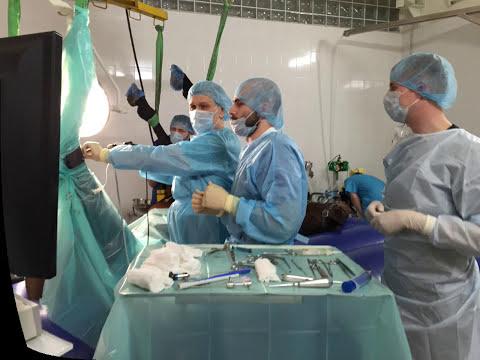 Артроскопия скакательного сустава у лошади