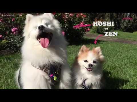 """Görme Yetisini Kaybeden """"Hoshi"""" ve Yanından Hiç Ayrılmayan Dostu """"Zen"""""""