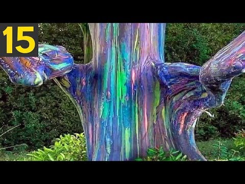 Top 15 STRANGE Trees you Didn't Know Existed
