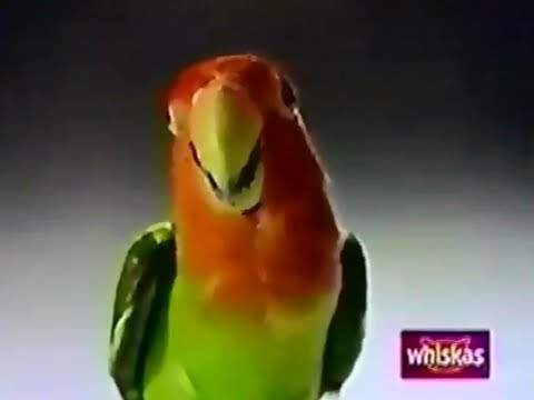 Whistas Cat Food Kitty Cat Meets The Love Bird 1993 TV Commercial HD