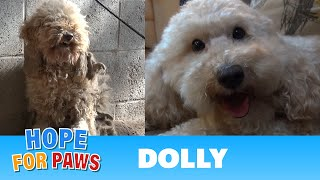 Hope For Paws: A severely matted poodle gets rescued and then makes a transformation of a lifetime! thumbnail