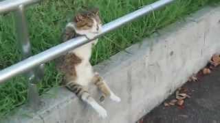 Прикол накуренный кот