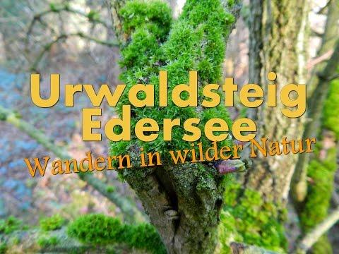 Urwaldsteig Edersee - Wandern in wilder Natur [HD] [Teil 3 von 3]