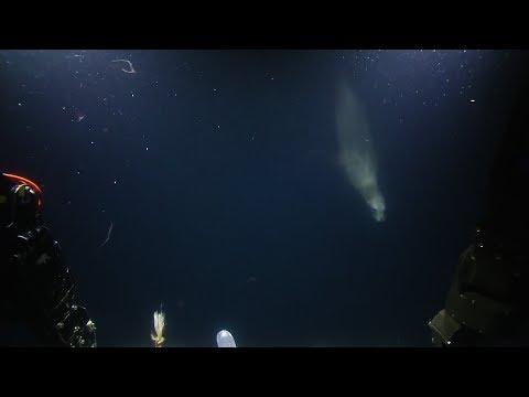 Sea Lions Swirl Through Squid Squad | Nautilus Live