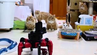 【マンチカンズ】ロボ軍団VS猫軍団 ~ robot army VS  cat family ~
