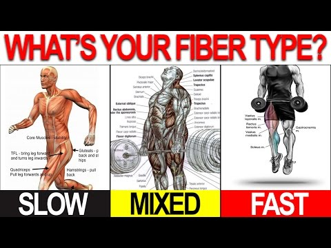 NEW Workout Program To Build Muscle Lose Fat (CUSTOMIZED TO YOU) from YouTube · Duration:  7 minutes 25 seconds
