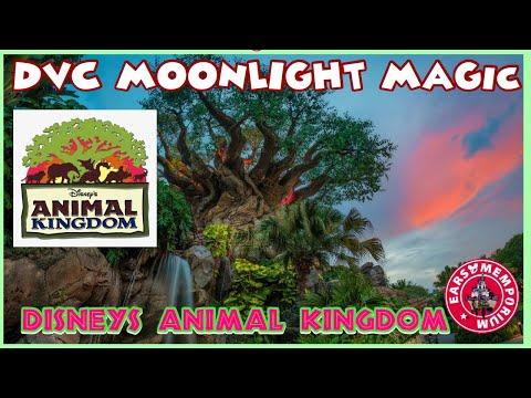 🔴 LIVE:DVC Moonlight Magic. Disney's Animal Kingdom Park. Late Night Fun!