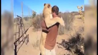Amazing moment a lioness named Sirga hugs a man who saved her life