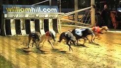 Greyhound-Rennen gehen vor die Hunde