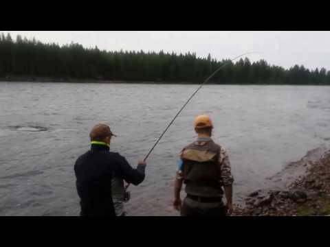 Dave Walsh Baltic Salmon