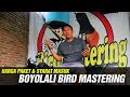 Kisah Sukses Syarat Masuk Harga Paket Sekolah Jawara Murai Batu Boyolali Bird Mastering  Mp3 - Mp4 Download