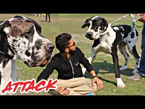 All Breed Dog Show in Lahore | Dog Club Of Pakistan | 2019