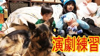 大型犬・#ジャーマンシェパード、マック君と孫達 年末恒例の家族演芸会...