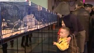 700 породистых голубей «выставили» в Петропавловске