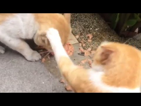 Cats fighting over food