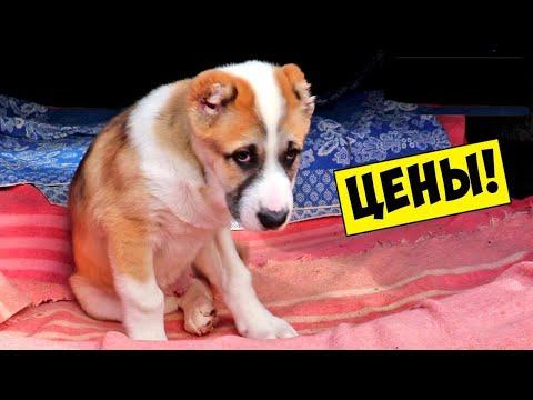 СОБАЧИЙ РЫНОК / Староконный Рынок Одесса - Рынок животных / Породы собак Продажа собак и кошек Цены