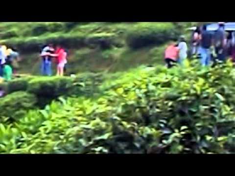 Download Darjeeling take to  tea leav  editing and mixing  quality & colour bankura w.b india