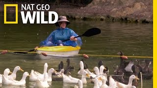 Bird Wranglers | We Move Animals