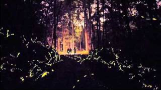 Synchronous firefly display brings visitors to Elkmont