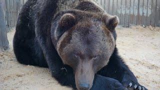 Медведь Донбасс, спасённый СОРАТНИКАМИ НОВОРОССИИ из зоны АТО, живет на новом месте
