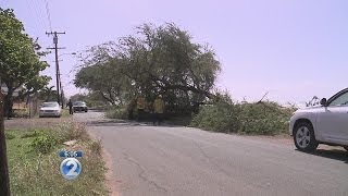 Strong winds impact Oahu