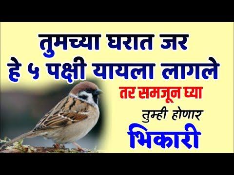 तुमच्या घरात जर हे ५ पक्षी यायला लागले तर समजून घ्या तुम्ही होणार भिकारी | Marathi Vastu Shastra Tip