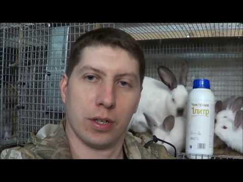 Вопрос: Нужно ли давать кроликам витамины Какие витамины и для чего?