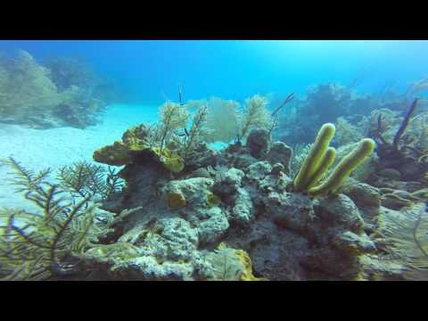 GrandTurk 1st Dive, Oct. 26, 2015