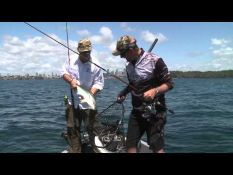 Whiting Fishing Sydney Harbour