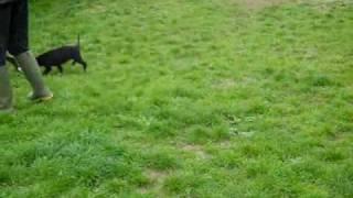 Dogs Trust Newbury: Thelma, Spike, Champ, Brady And Meg!