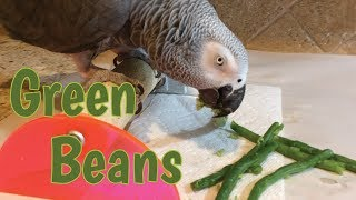 Einstein Parrot eating a green bean snack