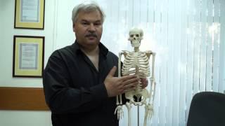 БОЛИ В ПОЯСНИЦЕ И БОЛЬШОЙ ЖИВОТ (врач на YouTube)(Врач-невролог М.М. Шперлинг (г.Новосибирск) рассказывает в своей небольшой медицинской лекции