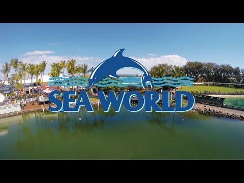 VLOG : SEA WORLD GOLD COAST AUSTRALIA