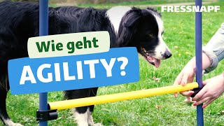 Wie geht Agility? Wir zeigen euch einfache Übungen zum Hundesport!