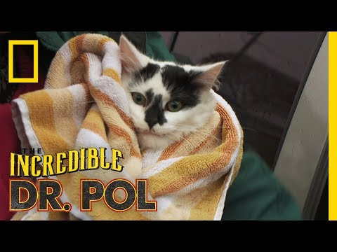 The Case Of The Curious Cat   The Incredible Dr. Pol