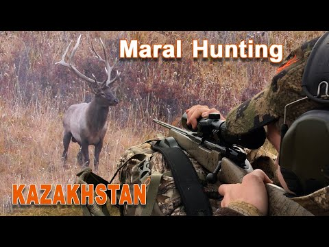 Maral Hunting (chasse) In Kazakhstan - 2020