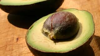 News Update Hawaii avocado: Huge 'head-sized' fruit in world record bid 06/12/17