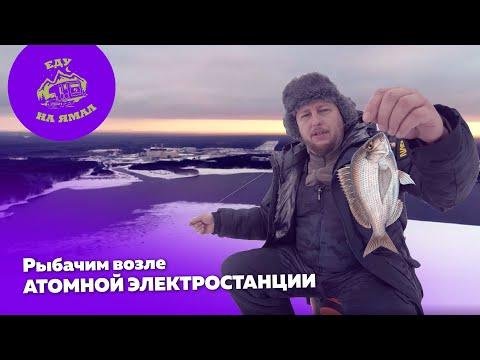 Еду на Ямал. На шипах| Рыбачим возле атомной электростанции (2 день путешествия)