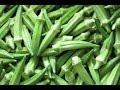 Bhindi  kare Diabetes  or Dhat ki bimari ko door