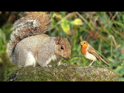 Videos for Cats to Watch – Birds and Squirrel Time