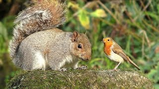 videos for cats to watch birds and squirrel time