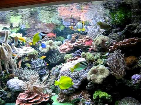 Coral Reef Aquarium 800 gallon Holland