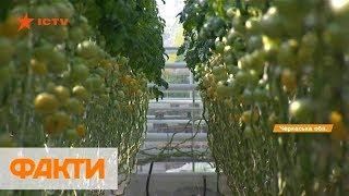 Тепличные овощи: как выращивают и на что обращают внимание покупатели